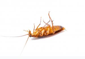 remedios cucarachas