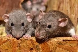 repelente ratones