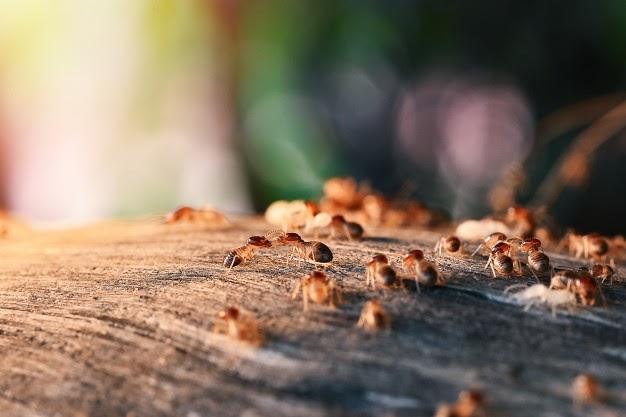 señales de termitas