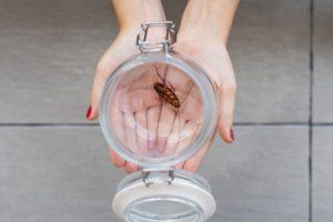 infecciones cucarachas