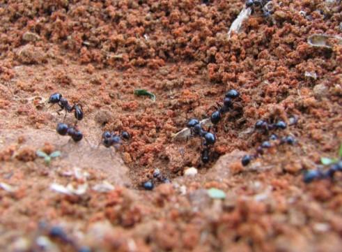 hormigas otoño