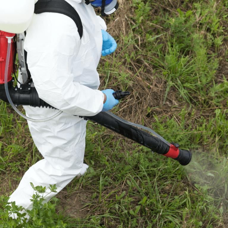 dia mundial del control de plagas