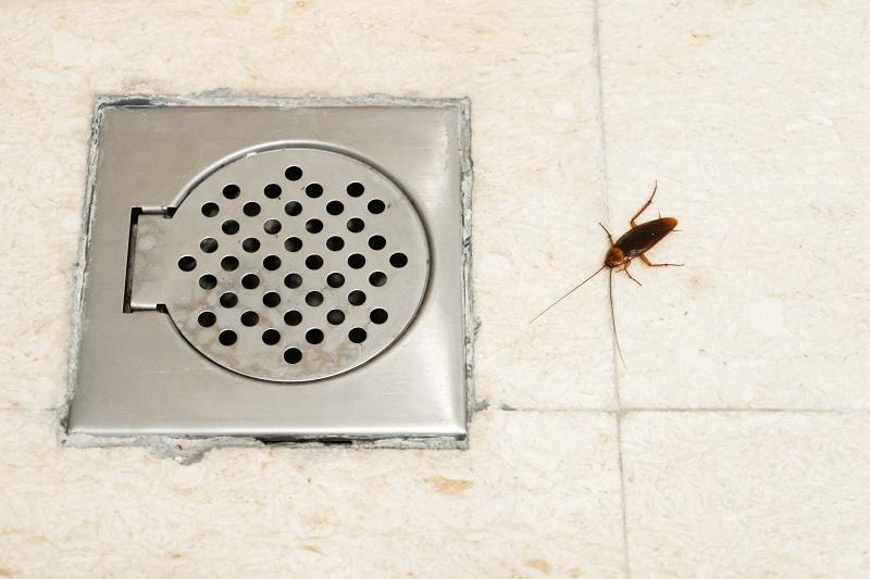 plaga de cucarachas en el baño de casa