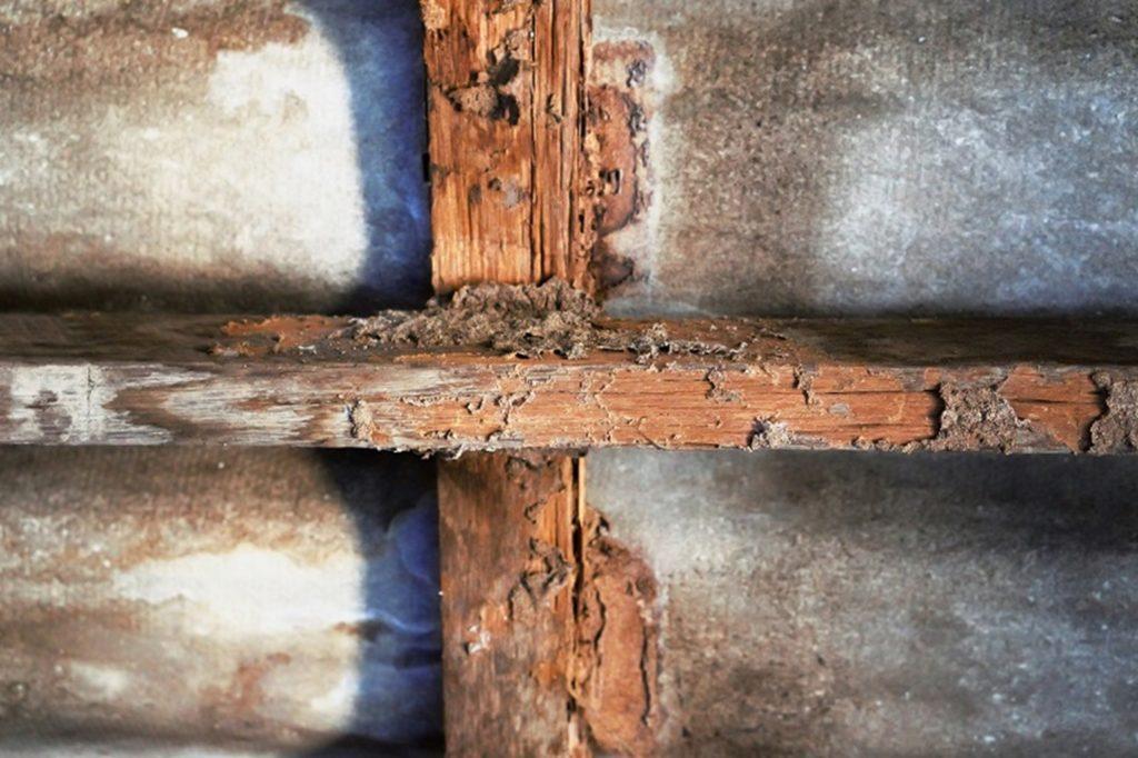 Viga afectada por termitas