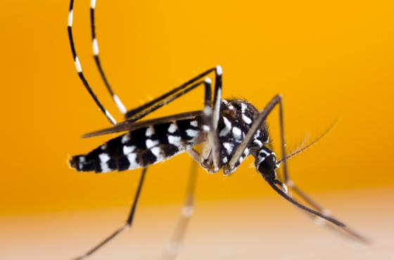 apariciones del mosquito tigre en España
