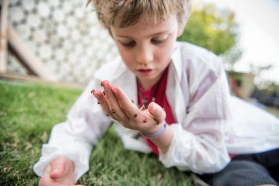 control de plagas en colegios y escuelas